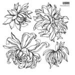 Chrysanthemums Stamp (2 Sheets)