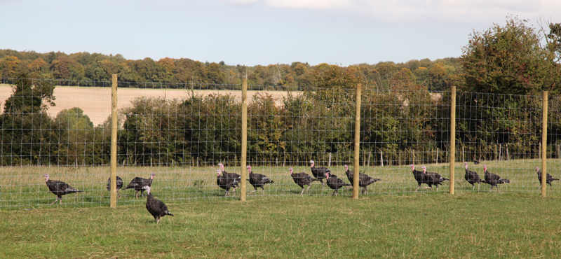 Free Range Bronze Turkeys