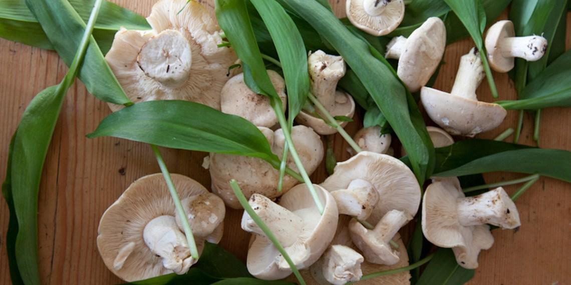 St Georges Mushrooms