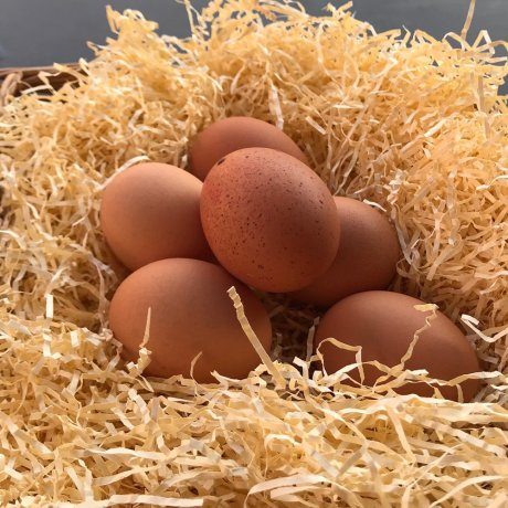 hallgate_FR_eggs