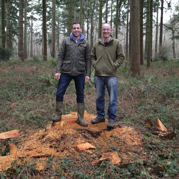 Douglas Fir Stump for Farm Shop Timber
