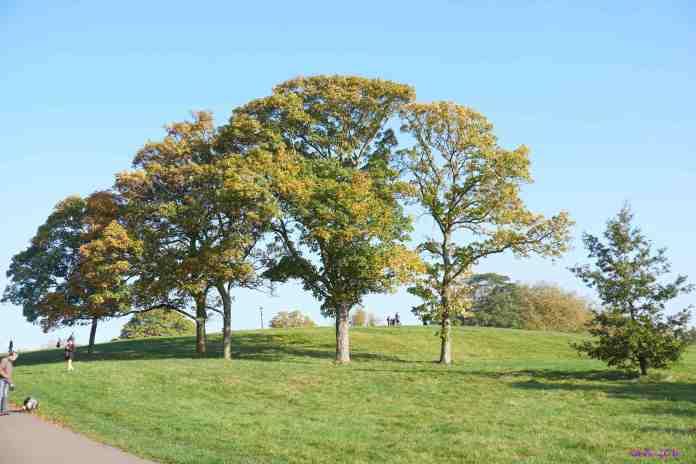 Three trees autumn1.jpg