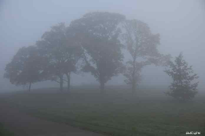 Three trees fog 3