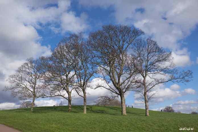 Three trees winter 1