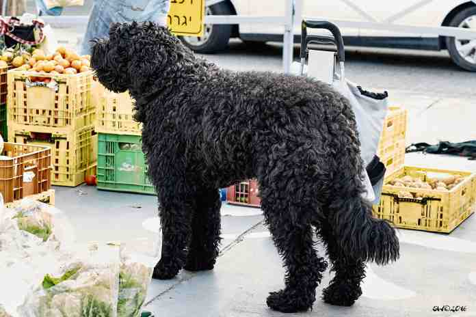 Ultimate shaggy dog picture1.jpg