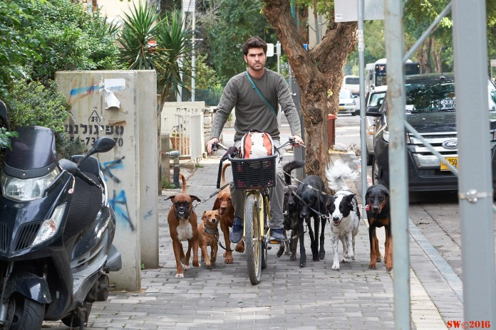 Dogs in the street