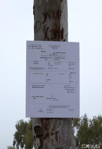 Eucalyptus sequence *2
