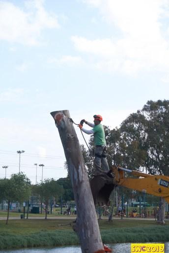 Eucalyptus sequence 4