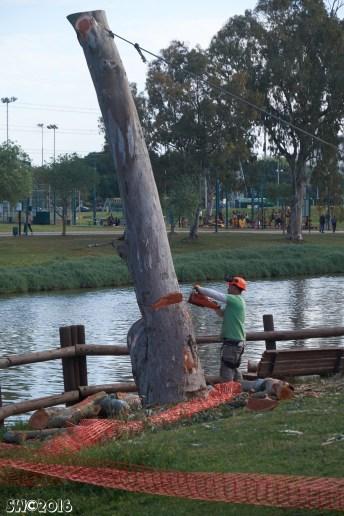 Eucalyptus sequence 5