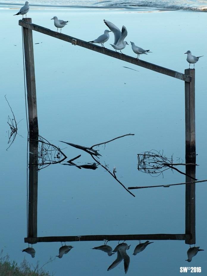 Gulls frame reflection.jpg