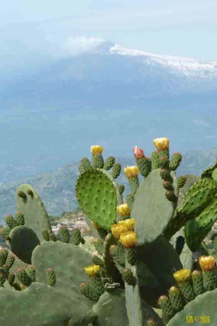 Cactus Etna.jpg