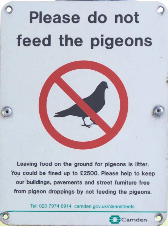 Pigeon joke