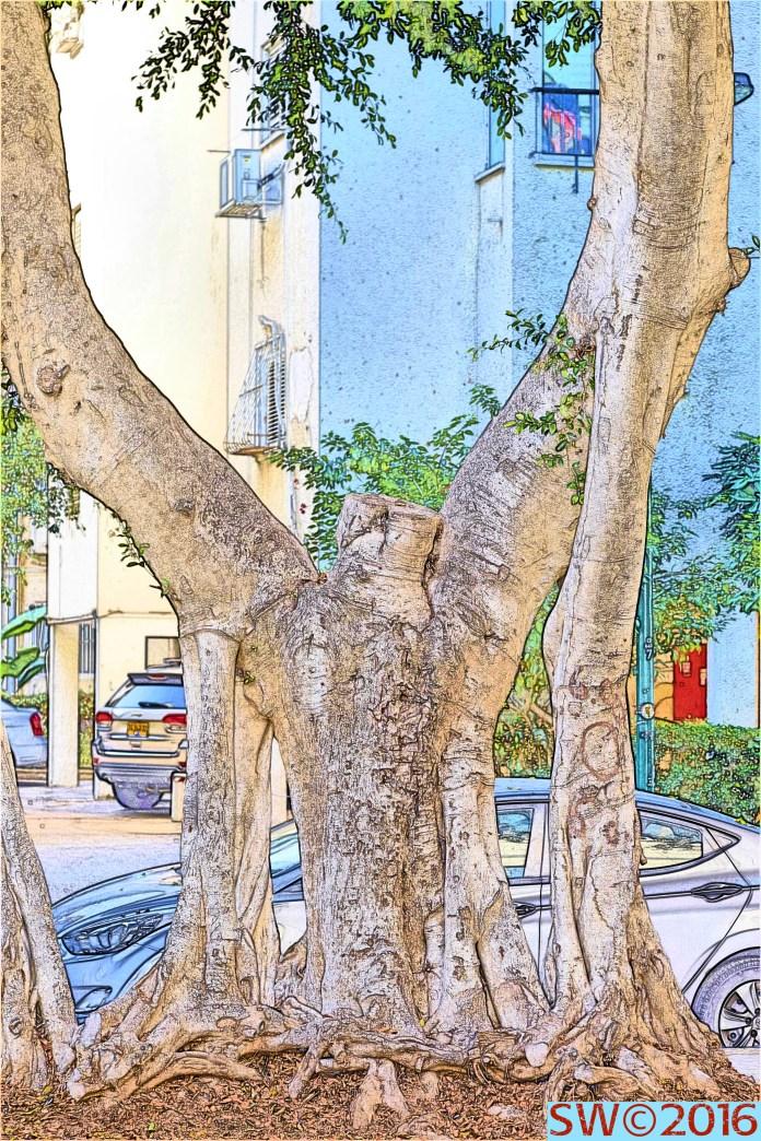 Conservatory Tree.jpg