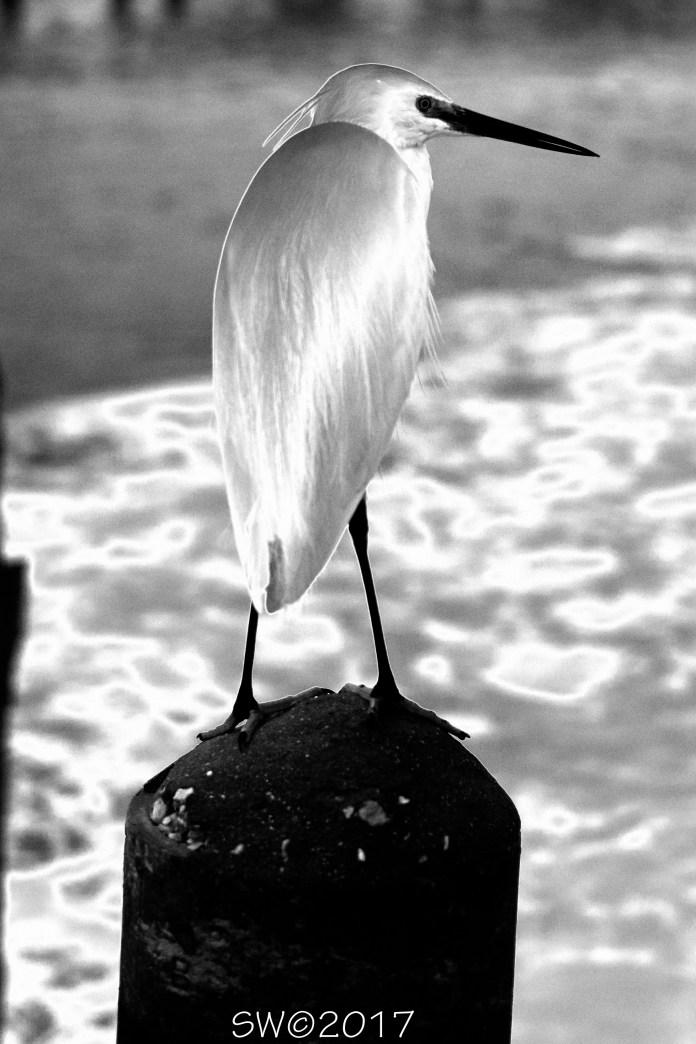 Egret (solarized)