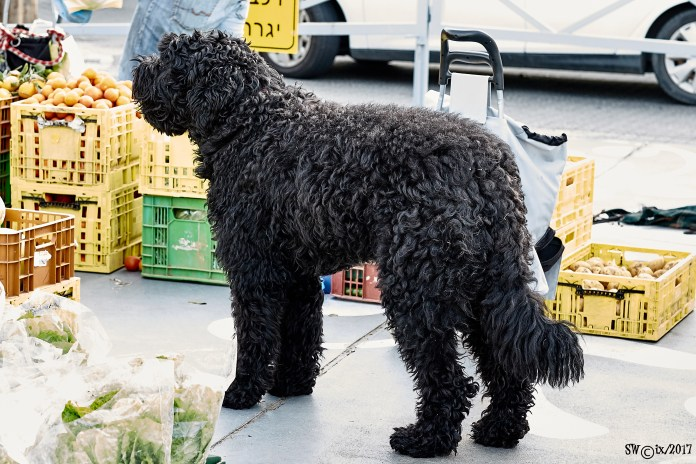 Ultimate shaggy dog picture.jpg