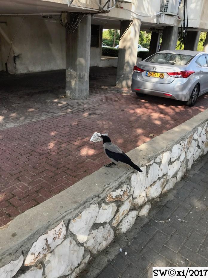 News for the birds