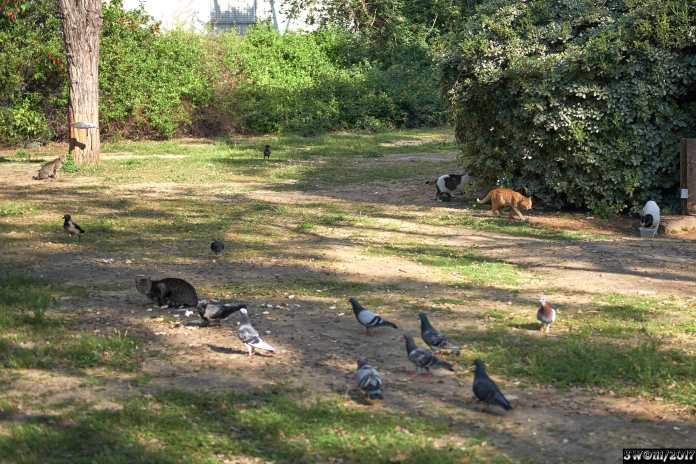 Pigeons and Cats 1