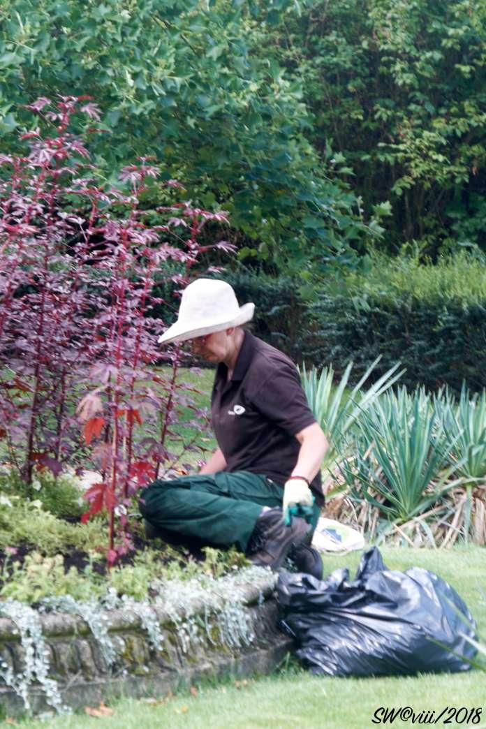 DSCF2730 Regent's gardener