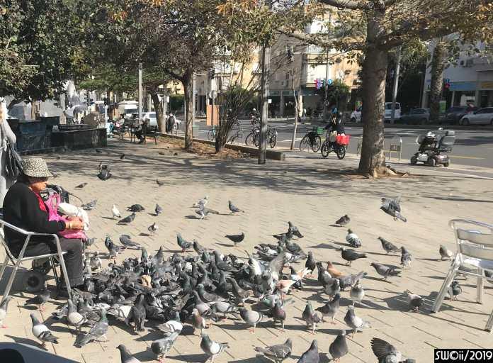 No pigeon should starve
