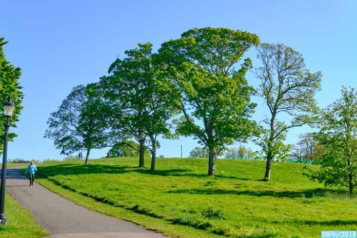 Primrose Trees