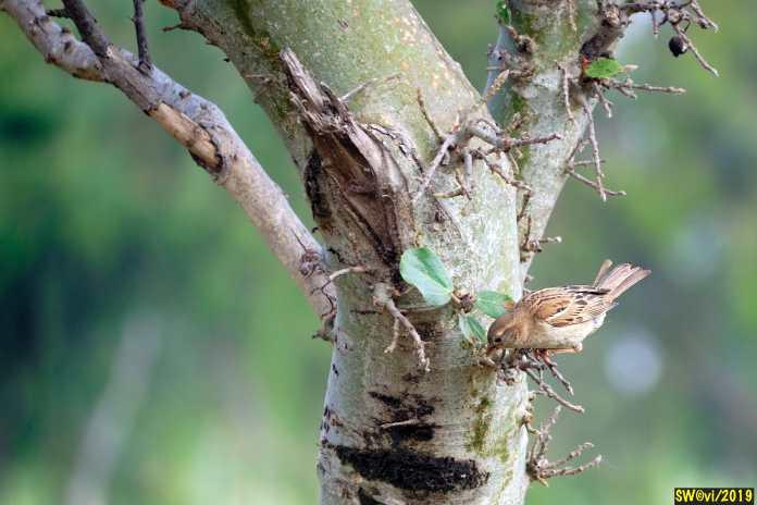 Sing, little birdie