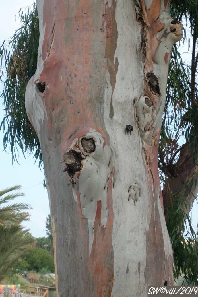 Treeface 1