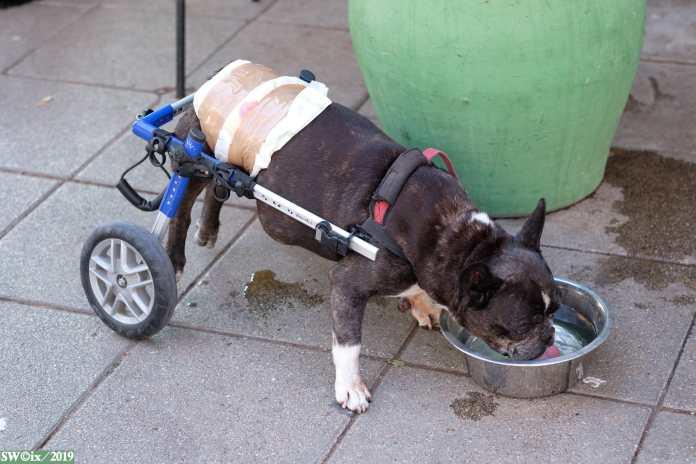 Doggie harness