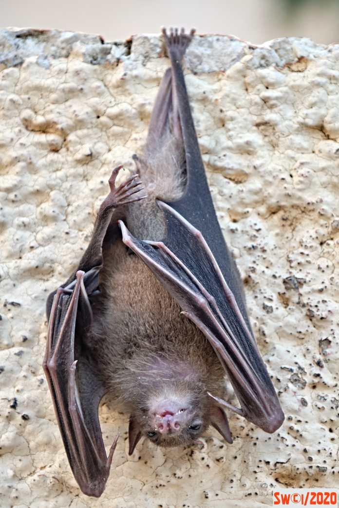 Bat upside down