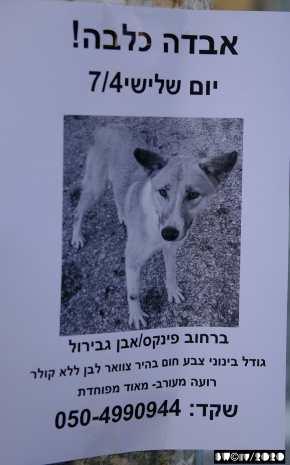 Lost dog, no name, no collar