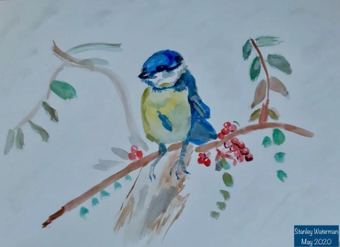 Tami's bird - 1