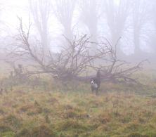 Bach im Nebel 2008, eigenes Foto, Lizenz:CC by