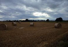 Round straw bales under a dramatic evening sky. Own photo, licence: CC by-SA/ Creative Commons Attribution-Share Alike 3.0 Unported