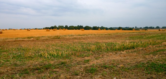 The setting sun turns the yellow bales and stubble field orange. Own photo, licence: CC by-SA/ Creative Commons Attribution-Share Alike 3.0 Unported