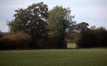 Fields between Broad Lane and Deadman's Lane