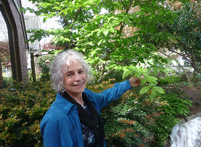 Barbara Jennings shows the leaf pattern of stewartia, one of several trees in her front yard, designed for privacy and colors changing with the seasons. (Janet Goetze)