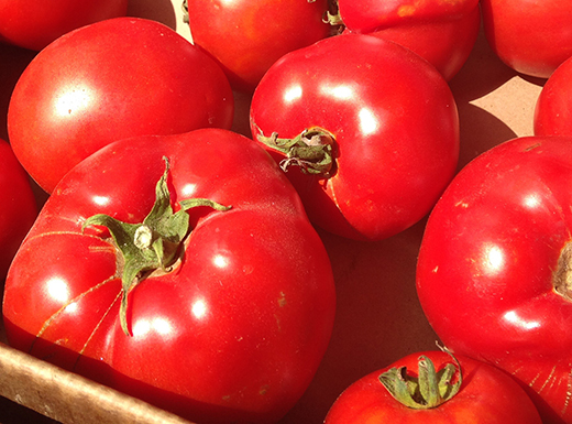 Tomato paste is a great way to preserve peak-season tomatoes. It's easy, tastes better than store-bought canned tomato paste, and doesn't take up much room in the freezer. (Jane Perkins)