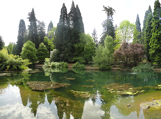Work party on Aug. 9 to spruce up Laurelhurst Park
