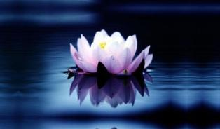 beateous lotus jpg
