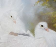 white doves of peace
