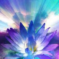 blue violet lotus