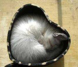 catval