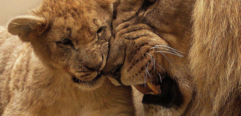leo love your inner big cat