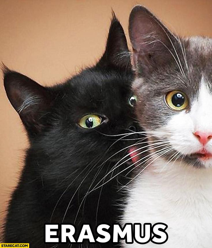 Erasmus Black Cat Licking White Cat Starecat Com
