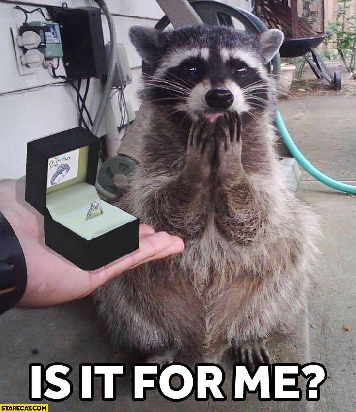 Weddings Memes