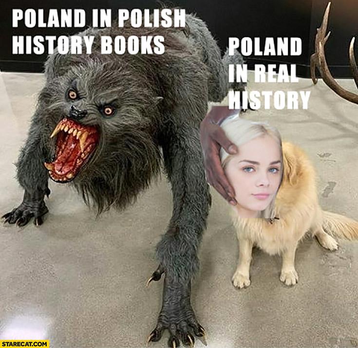 Polish Memes Starecat Com