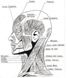 posture skull