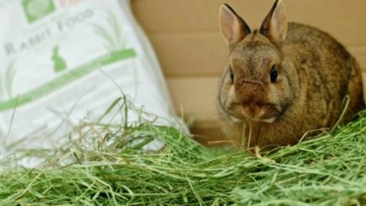 pakan kelinci alami Star Farm