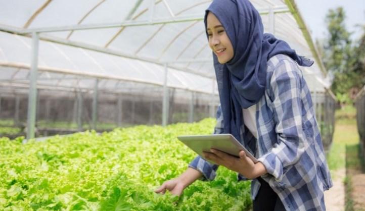 menumbuhkan minat petani milenial