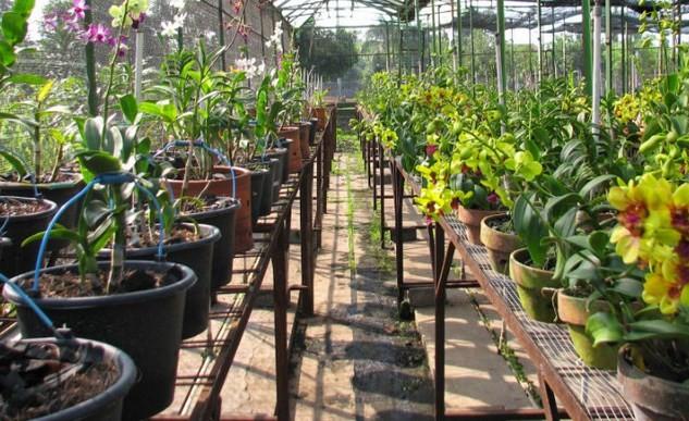budidaya-tanaman-hias-star-farm