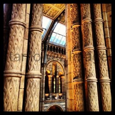 Natural History Museum, London 006